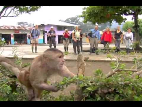 Amazon Jungle Tours with Guanitours / Tours a la amazonia con Guanitours