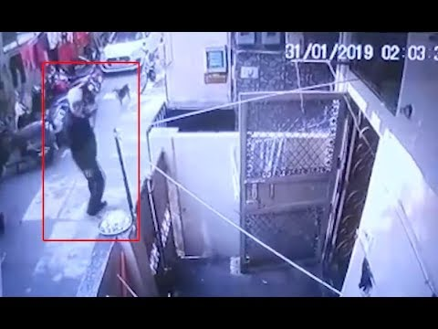 On Cam: Man caught flogging stray dogs on CCTV in West Delhi, detained