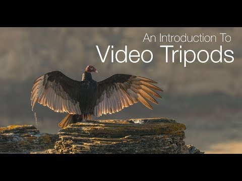 An Introduction To Video Tripods