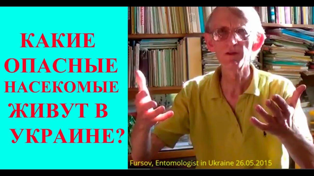 ТОП-10 Опасных В Украине Насекомых, Клещей, Пауков? Entomologist in Ukraine