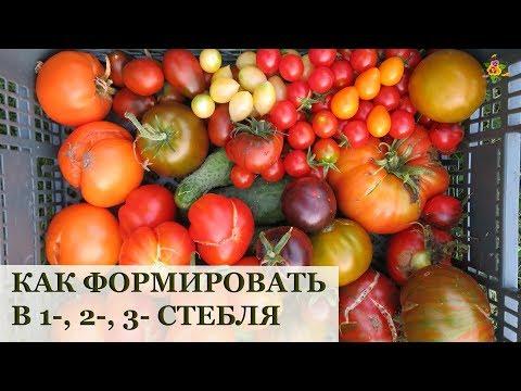 Вопрос: Как из одного стебля помидора сделать несколько?