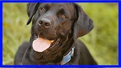 Erziehungshalsband: Hilfreich in der Hundeerziehung?