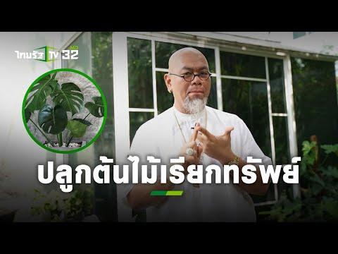 เคล็ดลับต้นไม้เรียกทรัพย์ ปลูกแล้วรวย!! : ซินแสเป็นหนึ่ง l แม่ว่าได้   ThairathTV