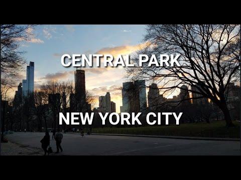 Midtown Manhattan - Central Park   A forrest in NYC