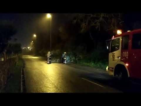 Cortada al tráfico la Ronda de República Argentina tras caer un árbol