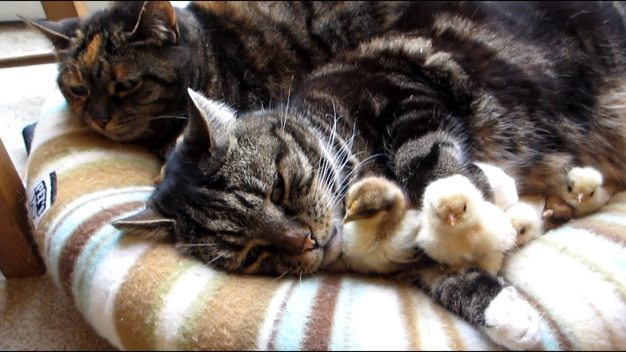 Cats Sleeping Together Gif