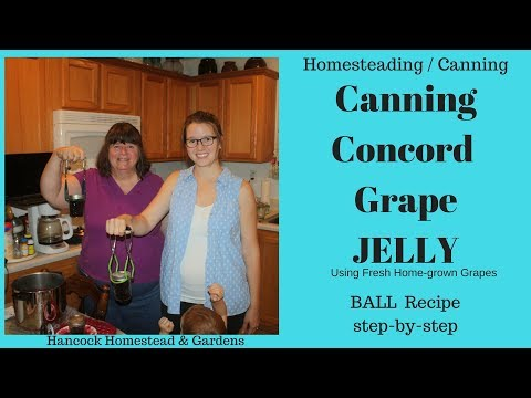 Homesteading Skills For Beginners: Canning Concord Grape Jelly (Ball recipe step by step)