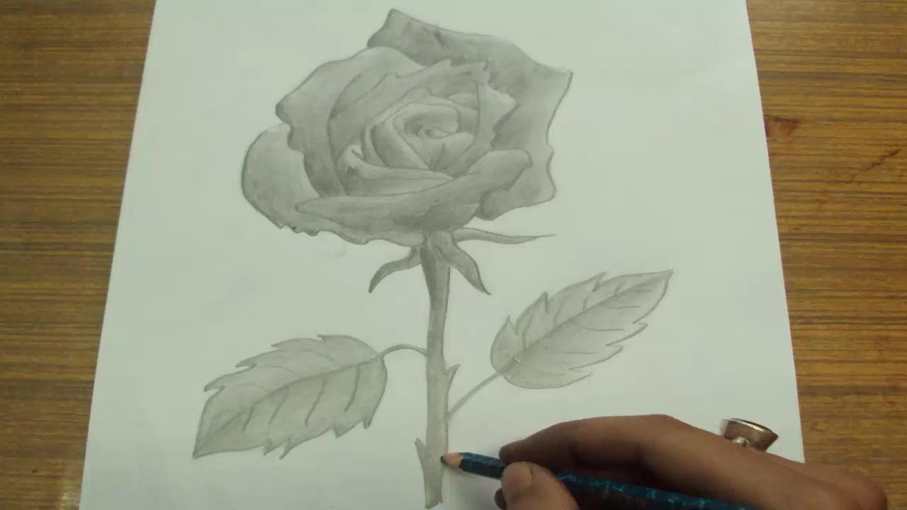 How To Draw A Rose With Pencil Blending And Shading