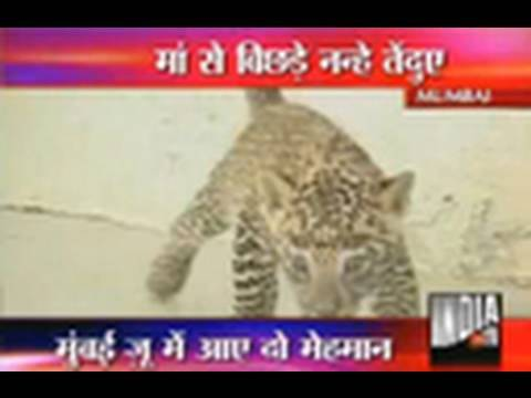 Save Tigers Campaign By India TV  Part 2