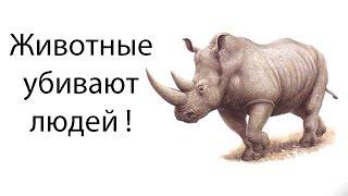 Животные убивают людей !