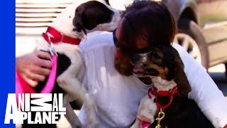 Reuniting a War Veteran with His Beloved Dogs