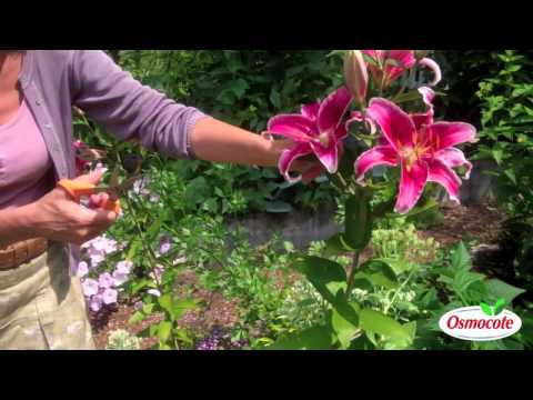 How To Prune Lilies