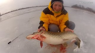 Жена словила щуку больше чем я! Жена на рыбалке Рыбалка на льду Поддубные