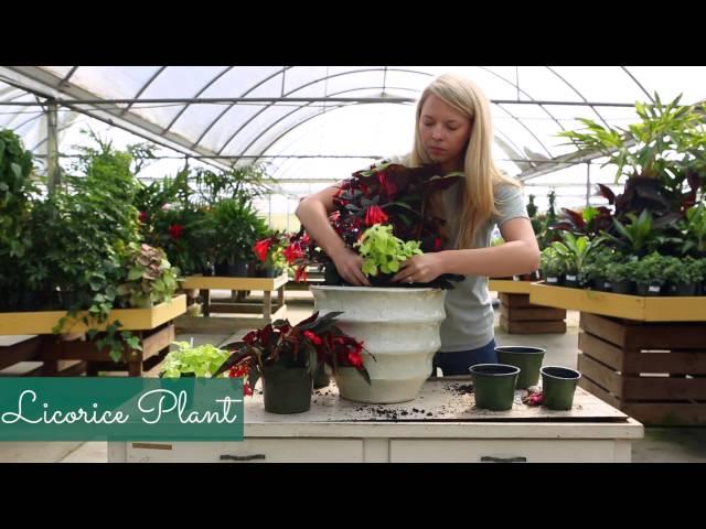 Container Garden Recipe for Shade