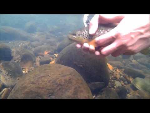 pesca-mosca-seca-en-león-2014