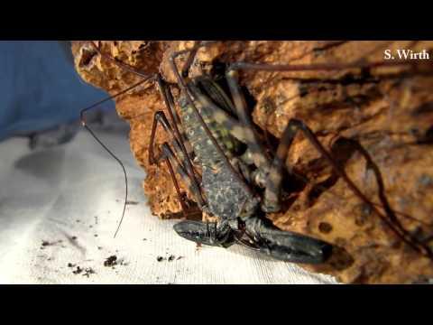 Arachnids and Evolution