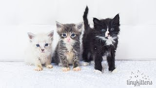 Six tiny rescued orphan kittens - the
