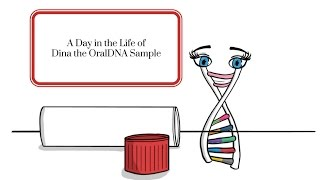 A Day in the Life of Dina the OralDNA Sample