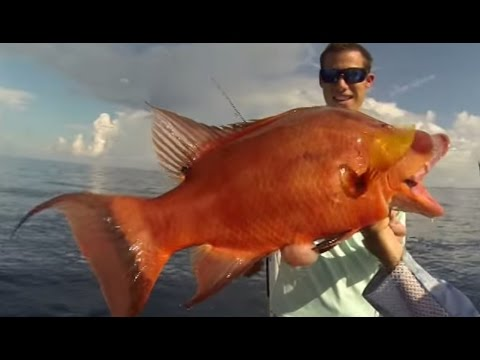 Hogfish Heavenly Fishing With Shark Battle Finale!