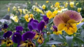 Microsoft Lumia 640 xl camera samples