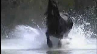 Beautiful Creatures - Horses