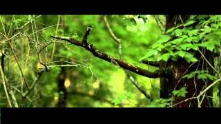 Maggie Koerner - Neutral Ground (Official Video)