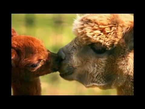 Видео Фото девушек целуются