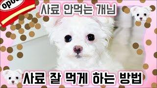 사료 안먹는 강아지 🖐 사료에 환장하게 만들기! 개밥주는 여자 유스루