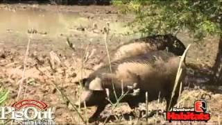 Приманка на кабана Hog Wild Attractant(Основное применение приманки на кабана - удерживание кабана на полях и прикормочных площадках, где вы охоти..., 2012-07-23T12:40:01.000Z)