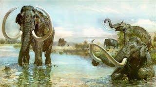 Que Pasaría Con El Elefante Si Clonaran Al Mamut
