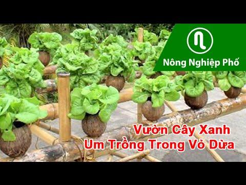 Vườn Cây Xanh Um Trồng trong Vỏ Dừa