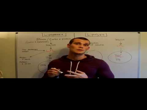 Fat Loss and Regulation - LPL and HSL