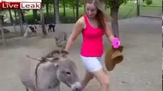 Watch - Girl like a donkey