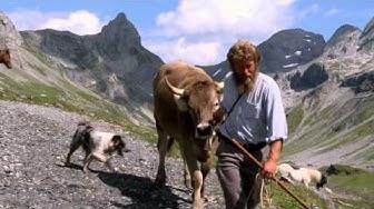 Alpsummer - Ausschnitt aus dem Kino-Dokfilm mit Daniel Bürgler auf der Glattalp