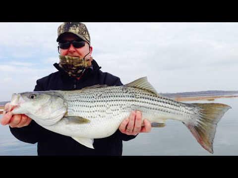 Striper Fishing Lake Texoma