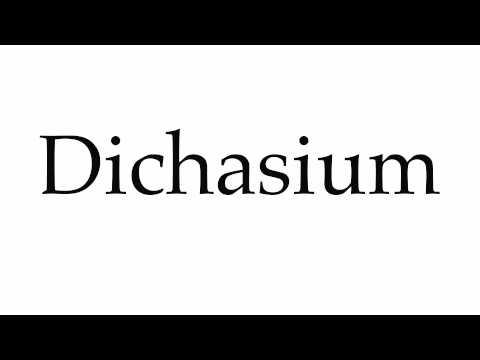 Header of dichasium
