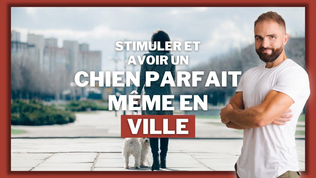 Avoir un chien parfait en ville