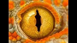 Sarp Yilmaz - Dinosauria
