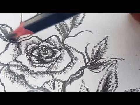 วาดดอกกุหลาบลายเส้น How to drawing Rosa