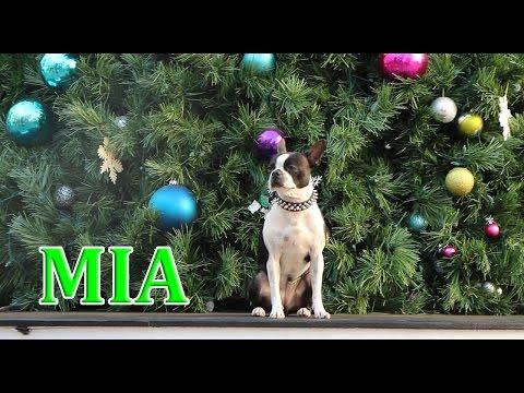 Amazing dog skating in Santa Monica Canifornia