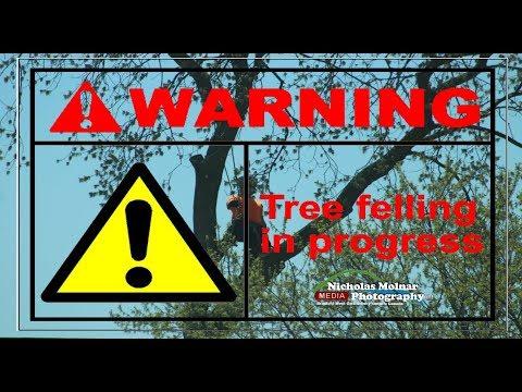 Amazing Dangerous Skills Tree Felling in  Bradford West Gwillimbury 2018