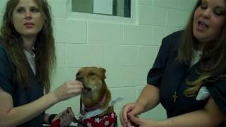 Paws In Prison - Greta