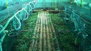 WAYANAD RABBIT FARM the largest in kerala