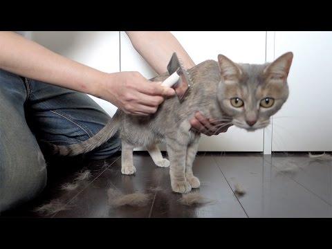 ヘアサロン・モフモフ - Cats Hair Salon -