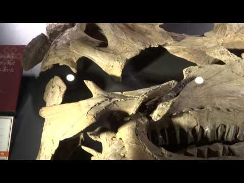 イグアノドン類  Iguanodontia:「大恐竜展」ゴビ砂漠