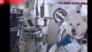 Видео Подборка Приколов  с Животными   Кошки Собаки  Смешные Животные