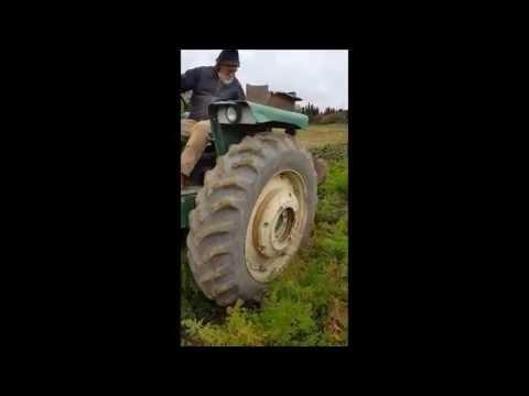 Harvesting Organic French Chantenay Carrots on Wood Prairie Family Farm