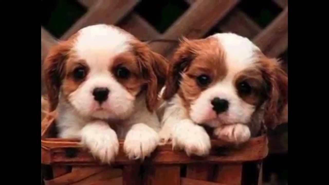Los Perros Más Pequeños Y Lindos Del Mundo Youtube