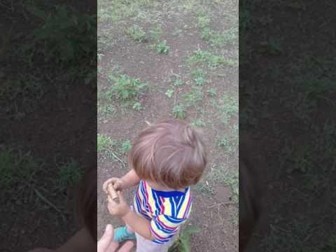 Sawyer's Wildlife - Daily walk with baby antelope