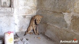 Desperate, Injured Puppy Appears To Pray For Help In Corner Of Temple